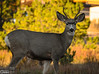 A week later, I got called to the front of the office . . . a small herd of deer was munching their way across the field.