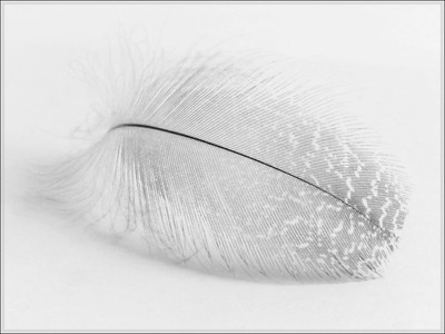 02 Feather white