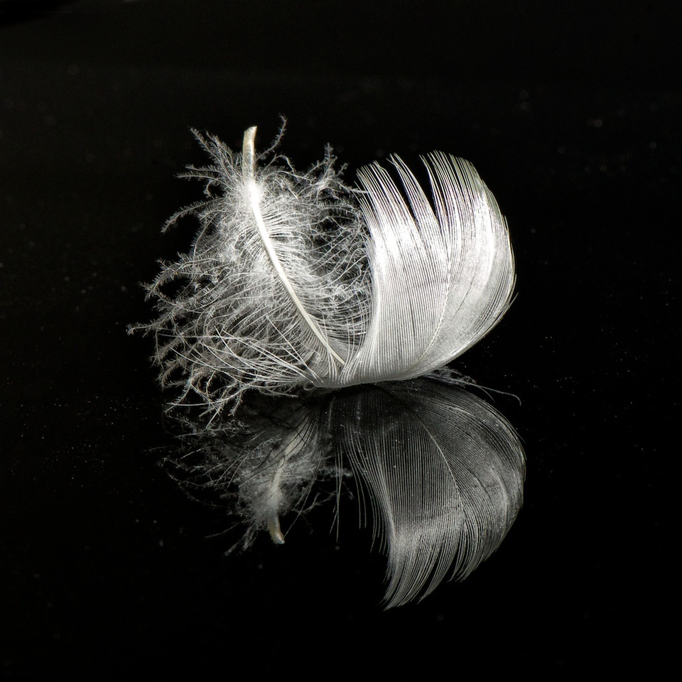 Feather Study: 6