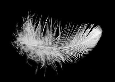 Studies: Feathers