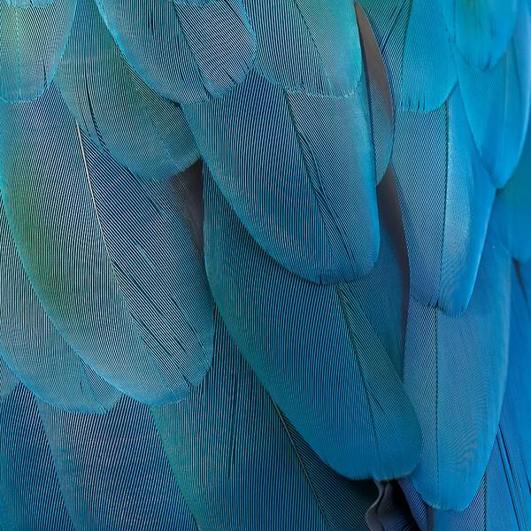 Parrot feathers<br /> Sarasota Jungle Gardens