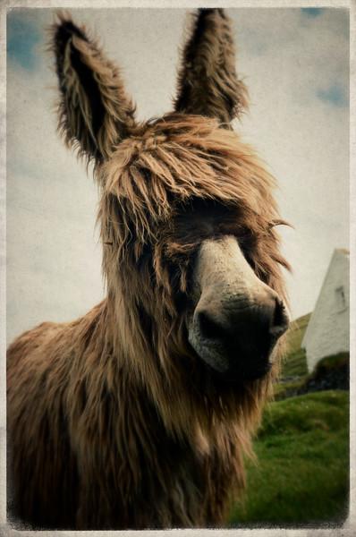"""right handsome donkey"""