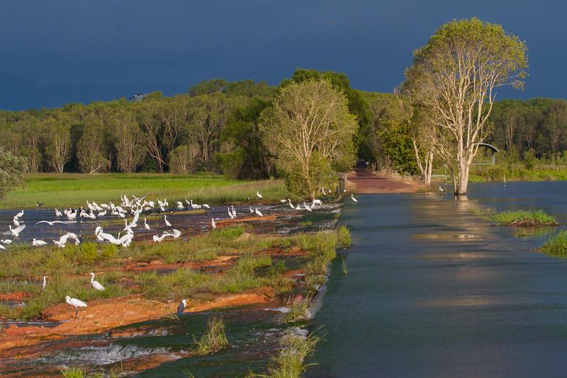 Fogg Dam - Northern Territory