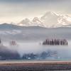 Morning fog in Skagit Valley, Washington