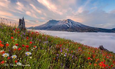 Mt. St. Helens after sunrise
