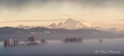 Morning fog in Skagit Valley, WA