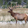 A second pose/view of the elk.