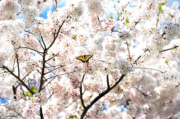 Butterfly in the Trees