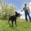 Richard Hill and his dog Clyde, 6, a mutt wher taking in the warm weather with a walk among the apple trees at Sholan Farms on Tuesday, May 15, 2018. Hill is a volunteer at Sholan Farms. SENTINEL & ENTERPRISE/JOHN LOVE