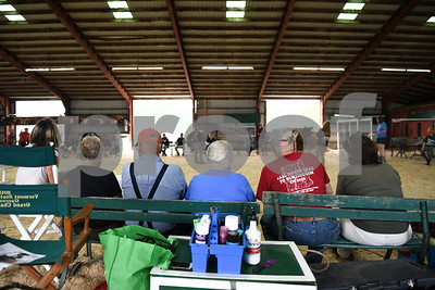 Spectators watch as dairy cattle are brought in to be judged for the qualifying round. The (Robert Layman / Staff Photo)