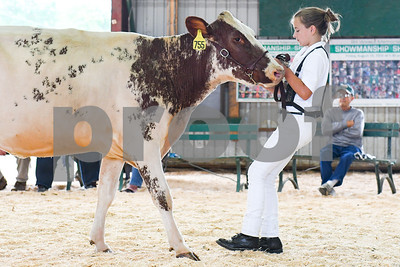 "Jaymie Landon, 11, of West Pawlet, walks with ""Hurricane,"" her milking shorthorn cow  as its judged during a showing at the Vermont State Fair Friday morning. (Robert Layman / Staff Photo)"