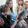 Vincent Lozzi IV, 11, of Lynn pets a chinchilla during the Curious Creatures presentation at Lynn Museum on Tuesday.