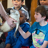 Isaiah Butler, 7, of Lynn gets to touch a north american alligator during the Curious Creatures presentation at Lynn Museum on Tuesday.
