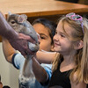 Beatrice Moriarty of Swampscott pets a chinchilla during the Curious Creatures presentation at Lynn Museum on Tuesday.