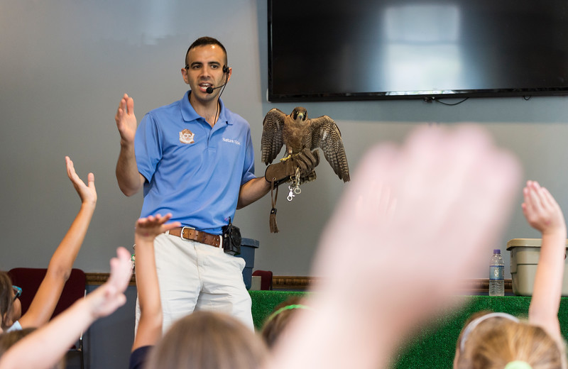 "Nick ""Nature Nick"" Jacinto shows the kids gathered at Saugus Public Library a falcon during his show on Friday."