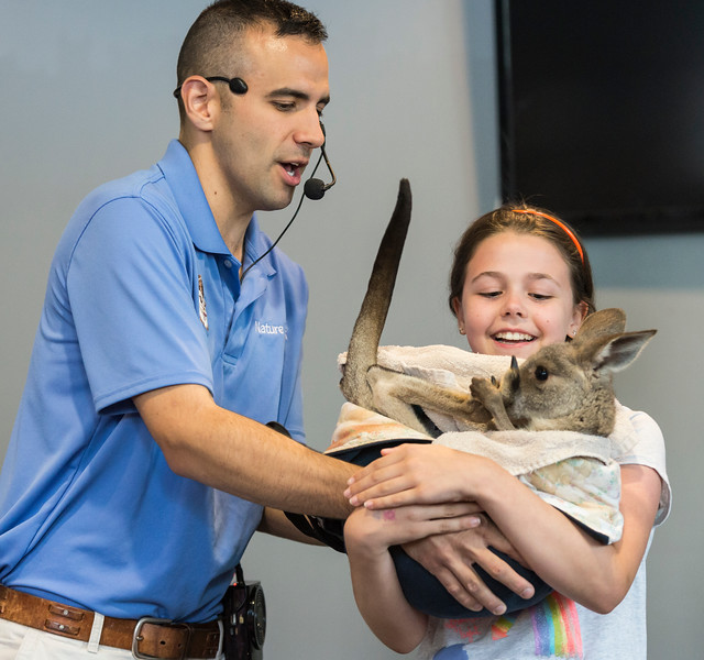 "Nick ""Nature Nick"" Jacinto hands Emma Curran, 10, of Melrose a baby kangaroo during his show at the Saugus Public Library on Friday."