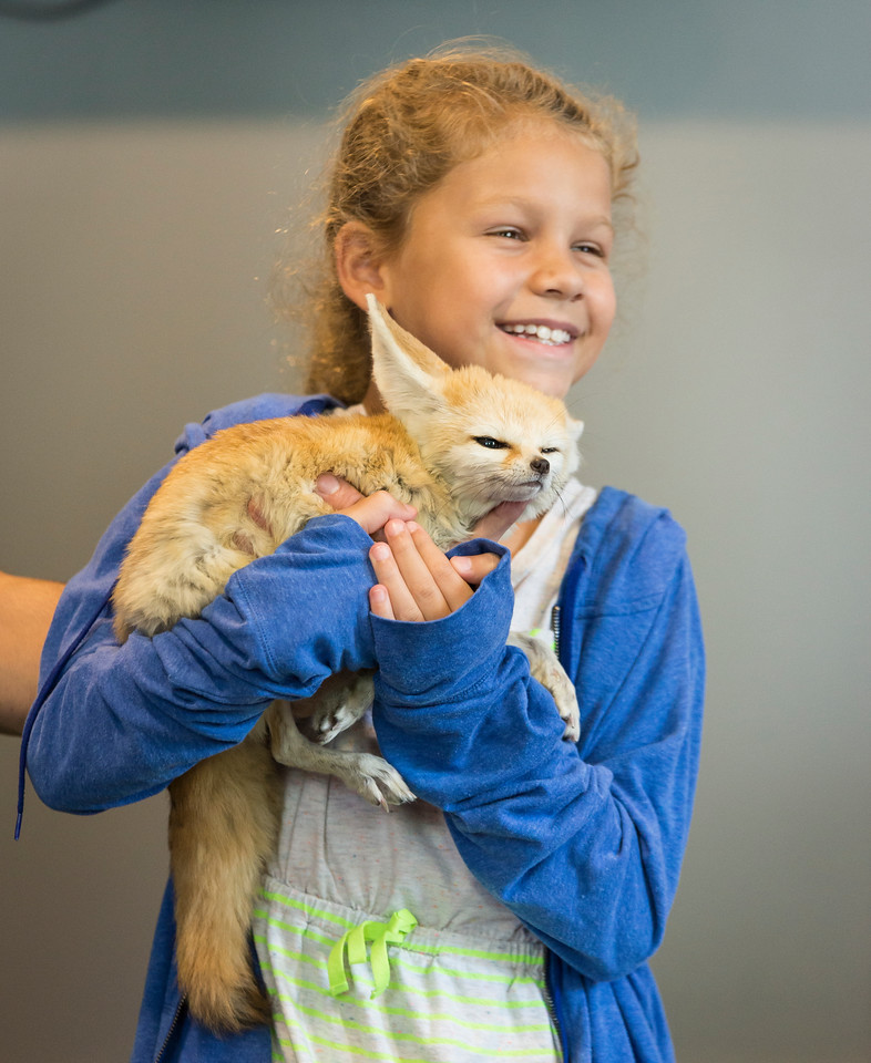 Jalyn dos Santos, 10, of Saugus holds a fennec fox during Nature Nick's Animal Adventure's show at Saugus Public Library on Friday.