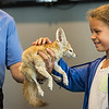 Jalyn dos Santos, 10, of Saugus pets a fennec fox during Nature Nick's Animal Adventure's show at Saugus Public Library on Friday.