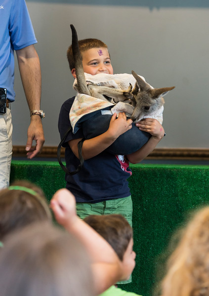 Dominic Ventresca, 6, of Saugus holds a baby kangaroo during Nature Nick's Animal Adventure's show at Saugus Public Library on Friday.