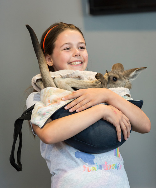 Emma Curran, 10, of Melrose holds a baby kangaroo during Nature Nick's Animal Adventure's show at Saugus Public Library on Friday.
