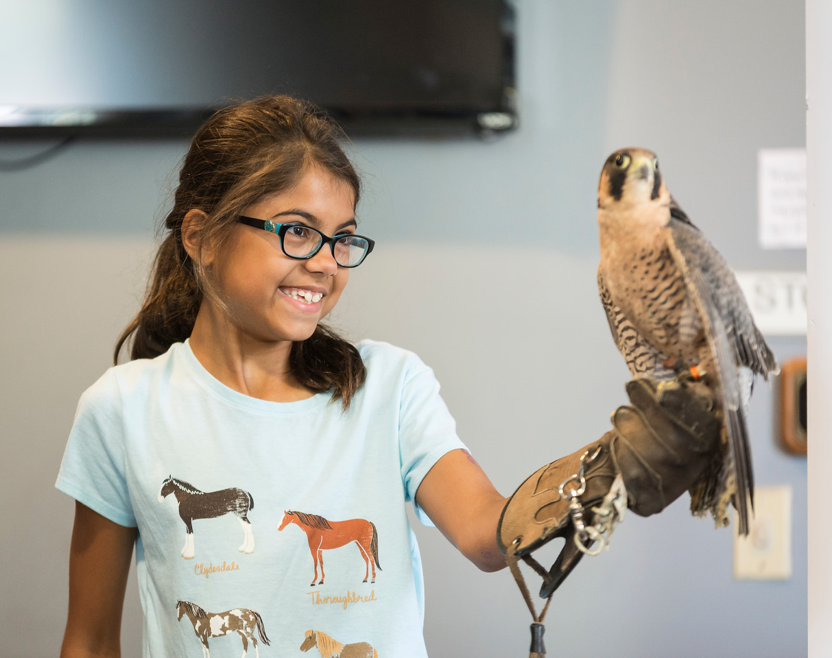 Thais dos Santos, 10, of Saugus holds a falcon during Nature Nick's Animal Adventures show at Saugus Public Library on Friday.