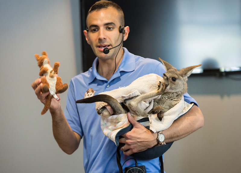 """Nick """"Nature Nick"""" Jacinto holds up a toy kangaroo and explains how he gives animals toys of themselves to keep them from imprinting and thinking that they are humans."""