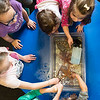 Kids touch sea stars in tubs when the New England Aquarium came to Saugus Public Library on Thursday.