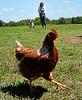 farm272514
