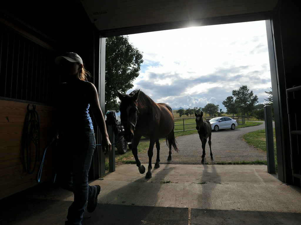 An assistant brings in Madonna with the 1-month-old foal following along into the breeding barn at the Jan Pamela Ranch near Big Horn.