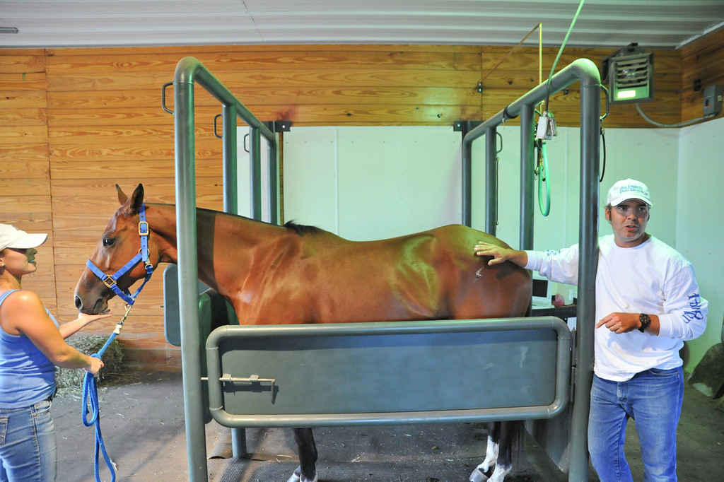 Joscelyn gray, left, holds the reins of a female polo playing horse with breeder Sabastian Mariani inside the breeding barn at the Jan Pamela Ranch near Big Horn. The horse was artificially inseminated and the team will flush out the uterus to recover a fertilized embryo to transfer to a retired mare–freeing the polo horse from the burdens of the pregnancy.