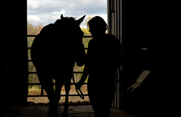 Trust between Horse and Rider