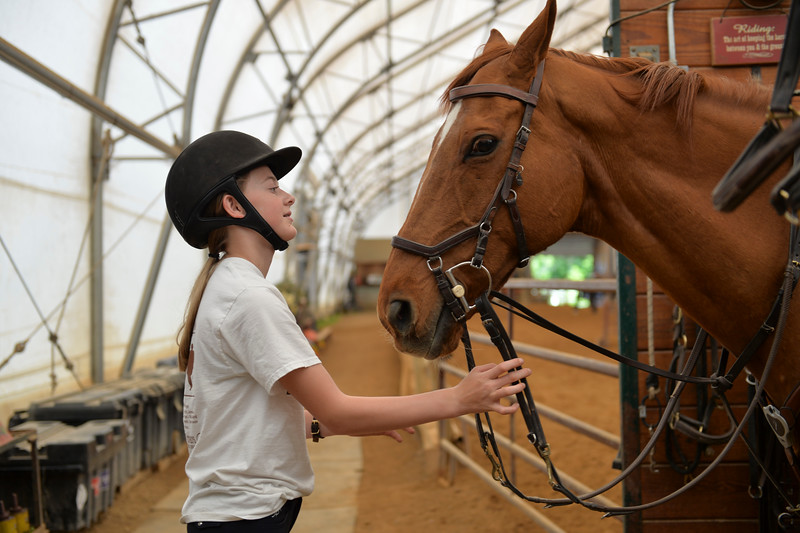 Justin Sheely | The Sheridan Press<br /> Fourteen-year-old Samantha Taylor looks at her father's horse Ombudsman at Colts Unlimited Thursday, June 21, 2018.