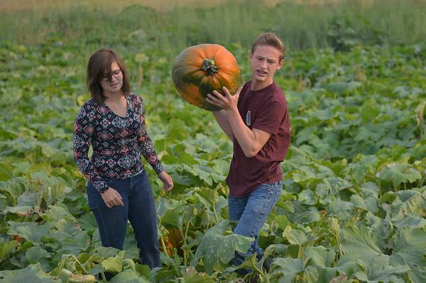 Koltiska Pumpkin Patch: A Family Affair