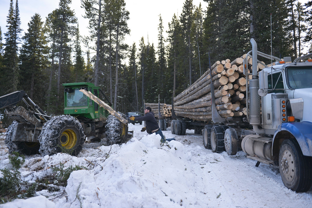 Justin Sheely | The Sheridan Press<br /> <br /> A truck driver tosses a loose log from the road at the Johnson Creek sale site on Cutler Hill in the Bighorn National Forest Wednesday, Jan. 17, 2018.