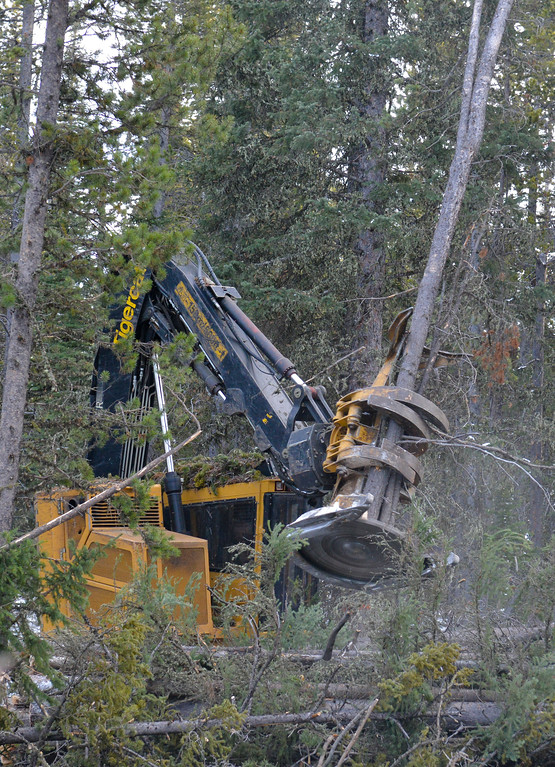 Justin Sheely | The Sheridan Press<br /> <br /> A feller buncher grabs and cuts multiple trees at the Johnson Creek sale site on Cutler Hill in the Bighorn National Forest Wednesday, Jan. 17, 2018.