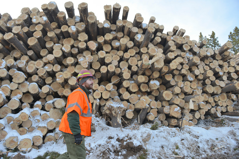 Justin Sheely | The Sheridan Press<br /> <br /> Forest Service contracting officer Matt Riederer walks past a pile of logs at the Johnson Creek sale site on Cutler Hill in the Bighorn National Forest Wednesday, Jan. 17, 2018.