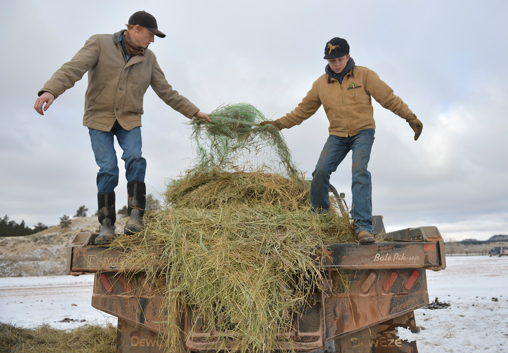Justin Sheely | The Sheridan Press<br /> Arvada-Clearmont High School junior Tanner Klatt, left, and brother Cameron clear hay off the back of the truck at the Quarter-Circle 7 ranch near Arvada Friday, Dec. 22, 2017. The brothers live on a ranch in Campbell County, about 40-miles from their high school in Clearmont. Every day the brothers balance work on the ranch, school and playing on the Panthers basketball team.