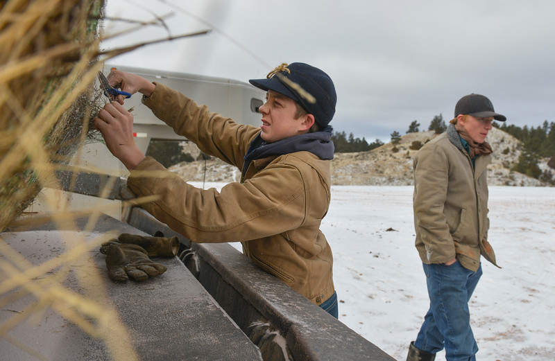 Justin Sheely | The Sheridan Press<br /> Arvada-Clearmont High School freshman Cameron Klatt, left, opens up a roll of hay as his brother Tanner enters the truck to feed the bulls at the Quarter-Circle 7 ranch near Arvada Friday, Dec. 22, 2017. The brothers live on a ranch in Campbell County, about 40-miles from their high school in Clearmont. Every day the brothers balance work on the ranch, school and playing on the Panthers basketball team.