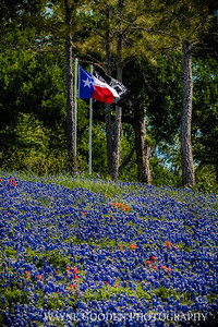Texas Flag on Hill of Bluebonnets