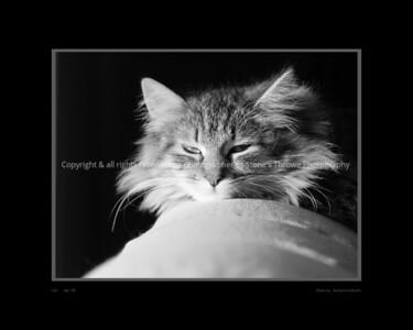 018-cat-madison_co-25apr04-c1-bw-00h1