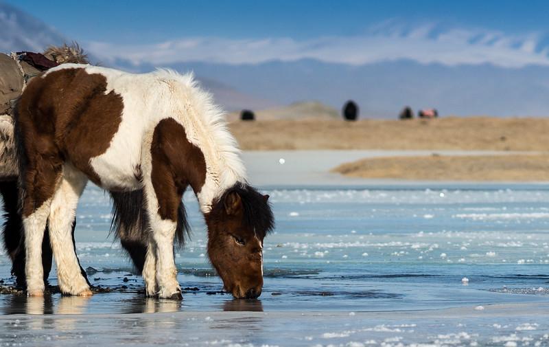 Mongolia 2017 Winter Group Trip Sample Photos