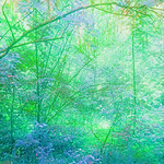 Entitled: Fairy Forest
