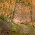 Entitled: Fairy Grotto