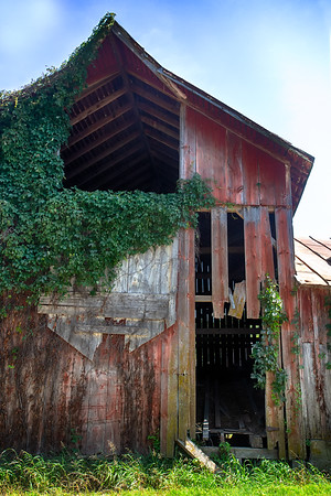 Rustic with Vines