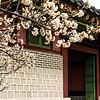 20170325 Changdeokgung Palace 012