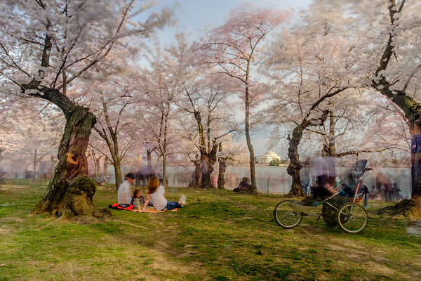 20190329-30 DC Cherry Blossoms 139