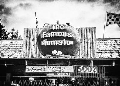 The Famous Tomato