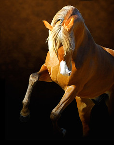 """""""Horse Power"""" - CANVAS 16"""" x 20"""" Ready to Hang $150.00"""