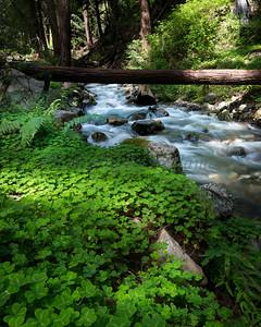 Clover along the Stream