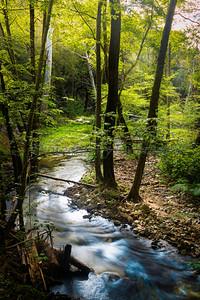 Morning along the Creek